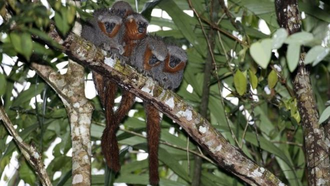 Amazon study discovers 381 new species in two-year period