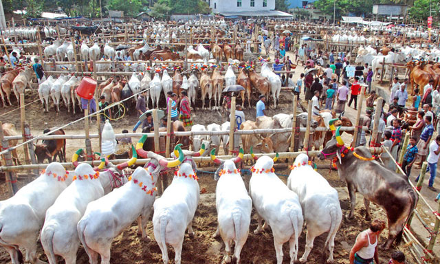 Khulna cattle markets humming with customers
