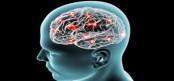 New source for brain's development found