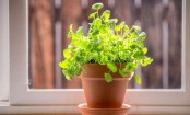 How to grow herbs that heal