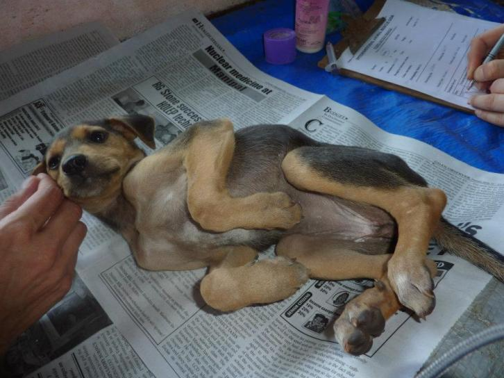 Cancer clinic for domestic animals opens in Indian Kerala