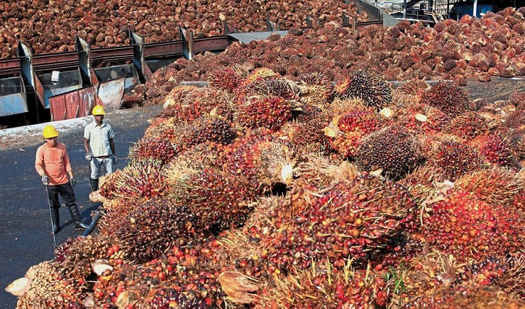 Malaysia's palm stockpile rise 8.8 pct in August