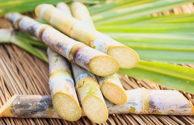 Sugarcane component cuts stress, increases sleep