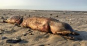 Mysterious fanged creature washes ashore in Texas