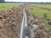 River water irrigation brings boon for Rajshahi farmers