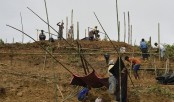 Bangladesh frets about population boom in Rohingya camps