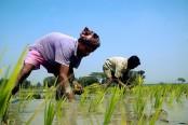 17,012 Panchagarh flood-hit farmers to get agri-inputs