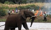 Bangladesh elephant rampage highlights dangers for refugees: UNHCR
