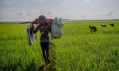 Rohingya man's Myanmar escape highlights relief and regrets