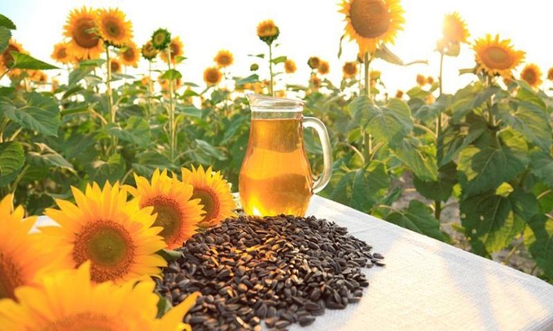 Sunny benefits of sunflower seeds