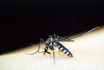 Nothing to worry about 'Super Malaria': IEDCR