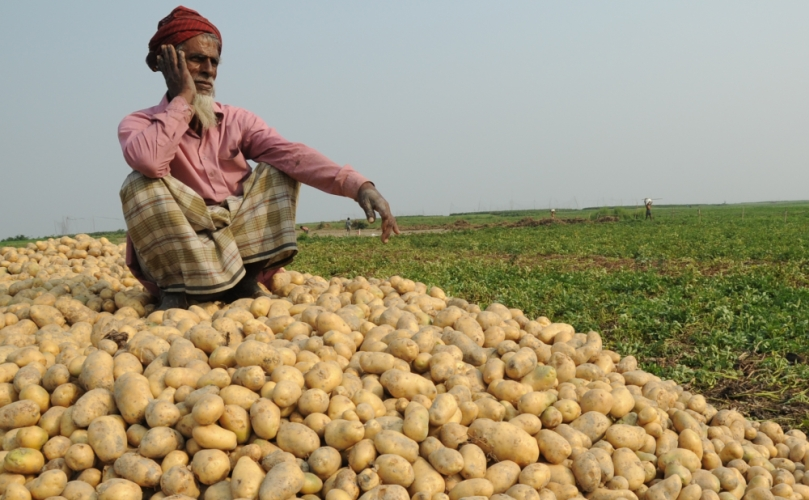 Potatoes not being released in markets as prices drop