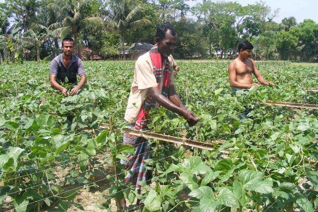 Denmark to train 10,000 Cox's Bazar farmers