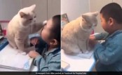'Play with me, Human!' Cat stops boy from studying in cutest video ever