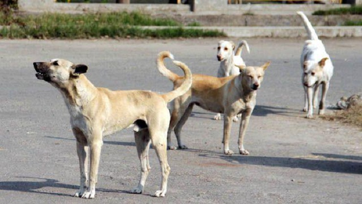 Iraqi animal lovers go online to help save Baghdad's strays