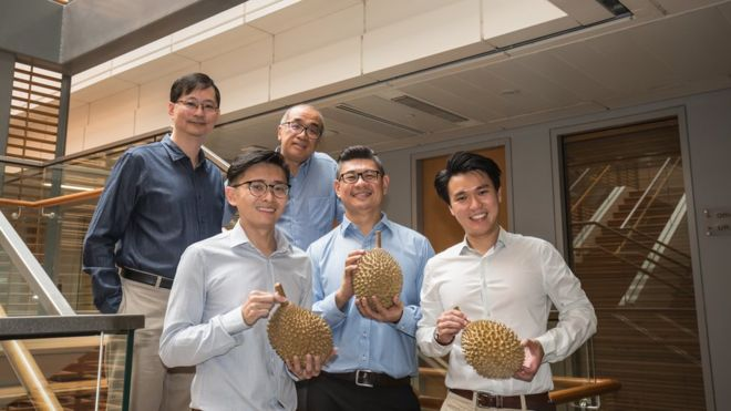 Singapore scientists reveal origins of durian's pungent aroma