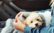 Italian woman granted paid sick leave to look after ill dog