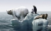 Melting ice making Greenland sea less saline, affecting marine life