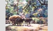 Alakesh Portrays Beautiful Rural Bangladesh
