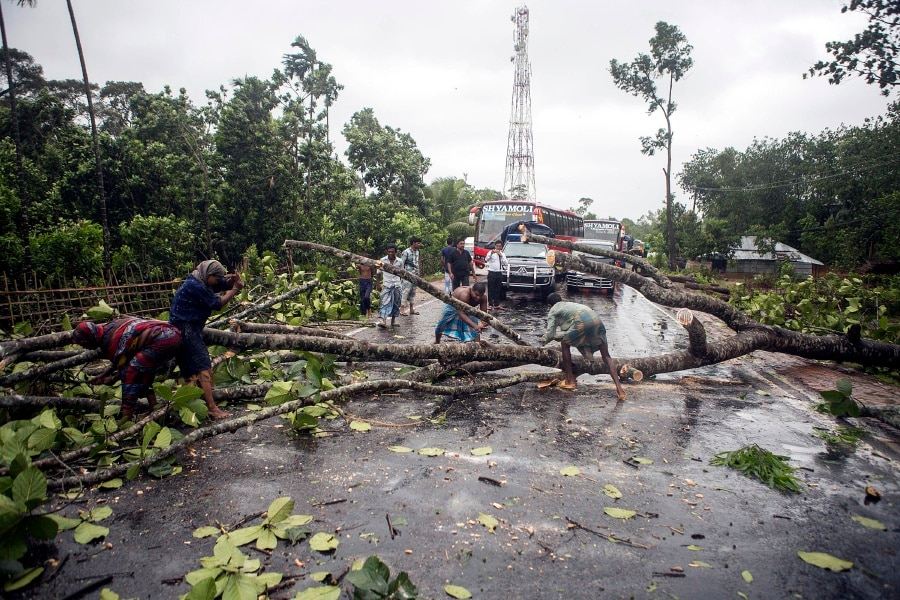Fallen tree halts traffic between Dhaka and northern region