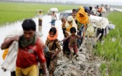 Rohingya walk through rain, muddy rice fields to reach Bangladesh (Video)