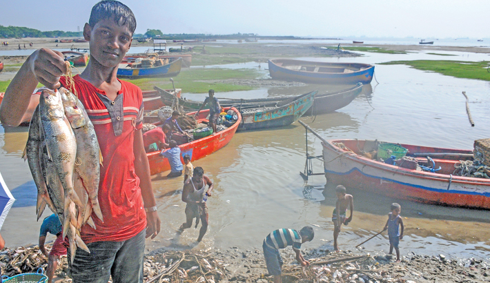 Hilsa hits markets  again as ban goes