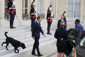 France's 'first dog' Nemo interrupts Macron meeting by peeing on palace fireplace