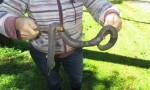Gigantic earthworm captured by woman in Australia