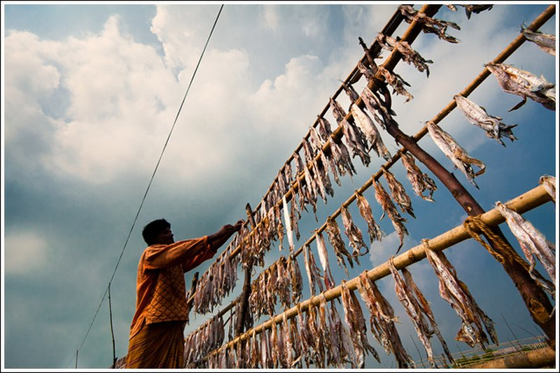 Dry fish collection season begins in Sundarbans