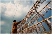 Dry fish collection season begins in Sundarbans