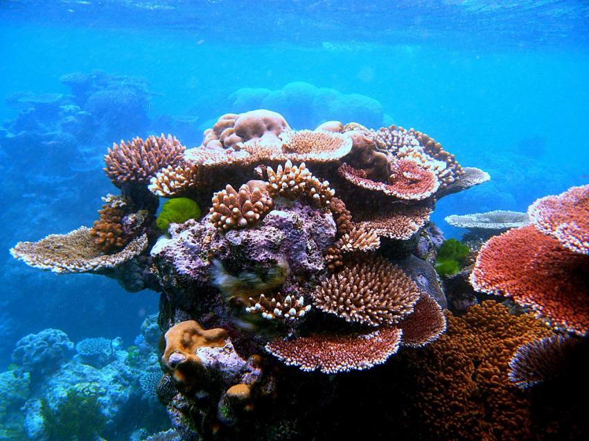 Blind corals eat plastic thinking it is prey, may choke: Scientists