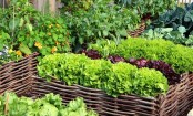 Seven winter vegetables you can grow in your garden