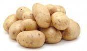 Potato growers face losses  despite bumper output