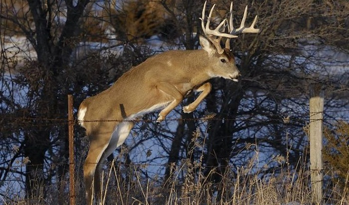 Deer kills French hunter in 'uncommon' attack