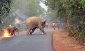 India award for burning elephant photo