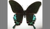 China butterfly smugglers jailed and fined by Jinan court