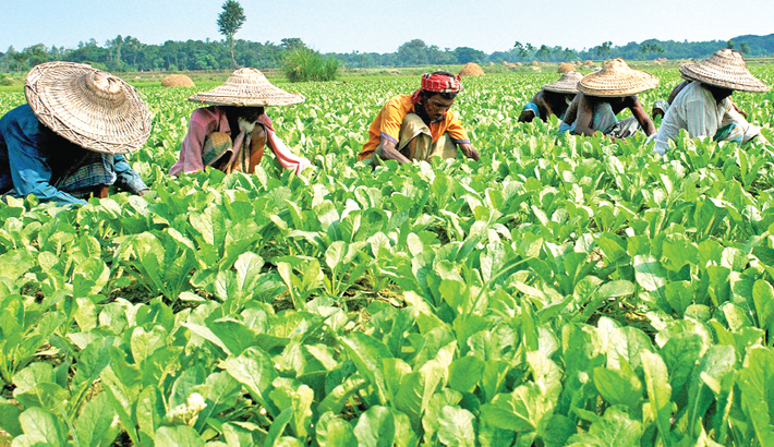 Farmers are busy taking care of vegetables