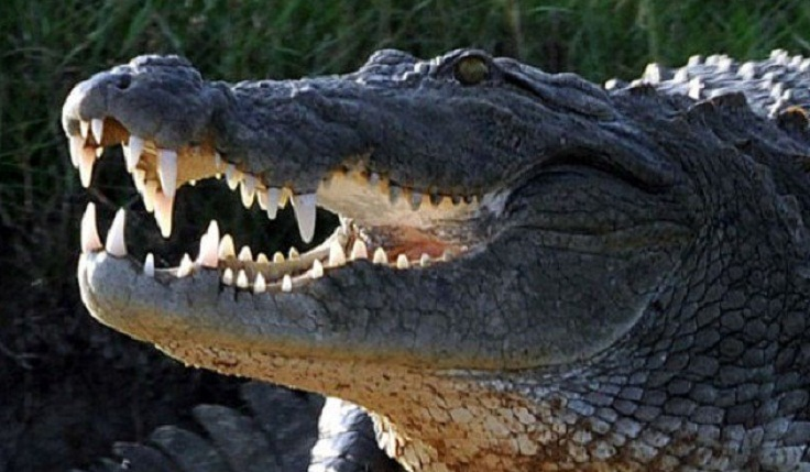 Selfie-seeking Thai tourist bitten by crocodile