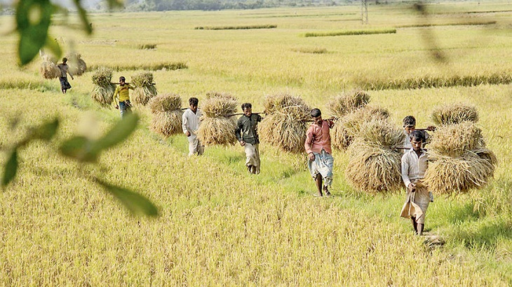 Agri specialists for new rice variety to boost production