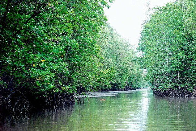 2 'forest robbers' killed in Sundarbans 'gunfight'