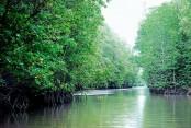 2 'forest robbers' killed in Sundarbans 'gunfight'