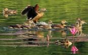 Jahangirnagar University campus abuzz with migratory birds