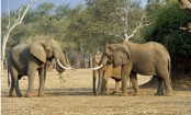 Trump puts hunting trophy imports on hold