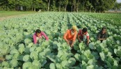 Experts for safe food production through organic farming