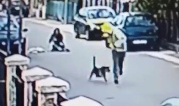 Viral footage shows courageous dog saving woman from being robbed (Video)