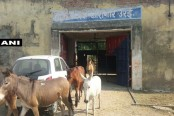 8 donkeys 'jailed' for destroying plants in India, walk free (Video)