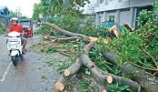 Mother, daughter among 3 killed in Bogra road crash