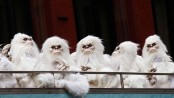 Yeti remains in museums are actually from bears and a dog