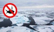 Arctic, major fishing nations agree no fishing in Arctic, for now