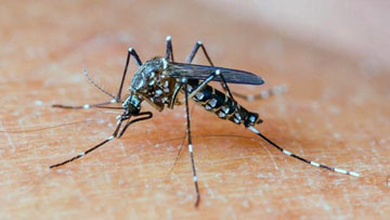 Dengue vaccine not deadly: Sanofi, Philippines